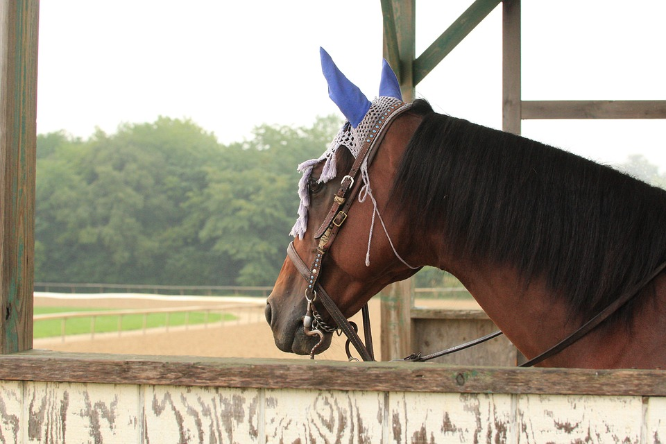 The Future of Arlington International Racecourse Comes Down to a Vote