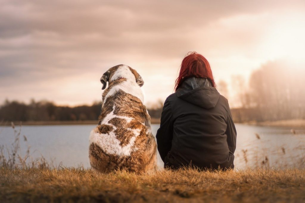 Pet Owner with Pet Looking at Sunset